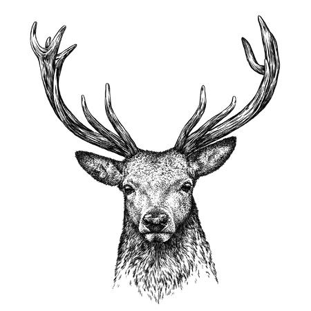 Gravent isolé cerf illustration croquis. art linéaire Banque d'images - 46498329
