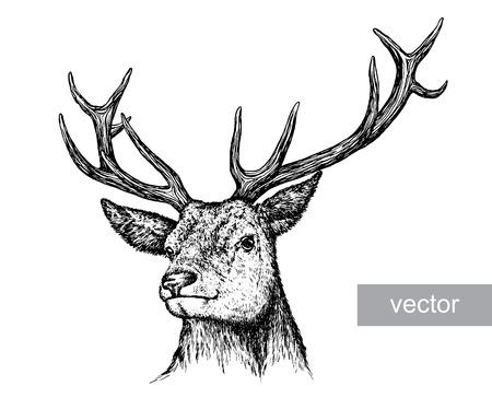venado: grabar aislado ciervos ilustración vectorial boceto. lineal de la técnica Vectores