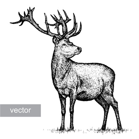 engrave isolated deer vector illustration sketch. linear art Çizim