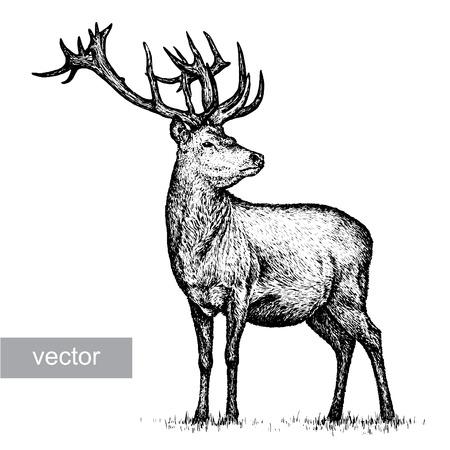 graveren geïsoleerde herten vector illustratie schets. lineaire kunst