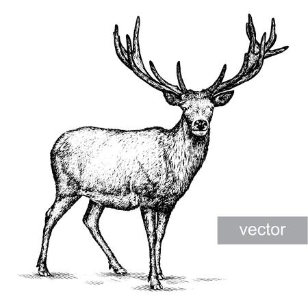 engrave isolated deer vector illustration sketch. linear art Иллюстрация