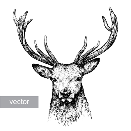 testa: grabar aislado ciervos ilustraci�n vectorial boceto. lineal de la t�cnica Vectores