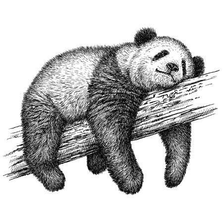 oso panda: grabar aislado oso panda ilustración boceto. lineal de la técnica Foto de archivo