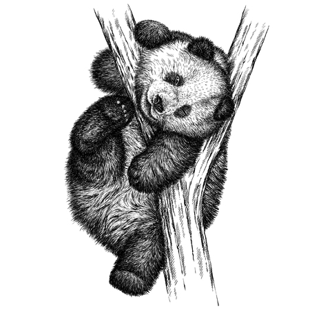 engrave isolated panda bear illustration sketch. linear art Stok Fotoğraf