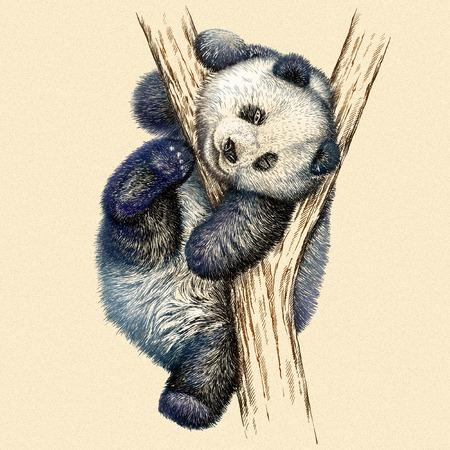 oso panda: grabar aislado oso panda ilustraci�n boceto. lineal de la t�cnica Foto de archivo