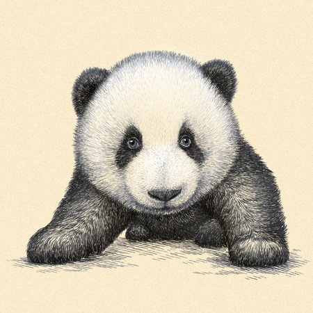 panda: engrave isolated panda bear illustration sketch. linear art Stock Photo