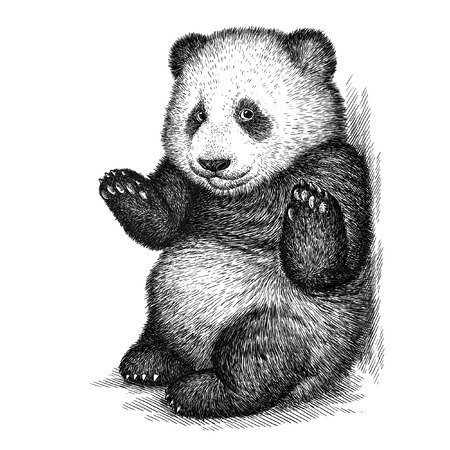 panda bear: engrave isolated panda bear illustration sketch. linear art Stock Photo
