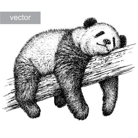 állatok: gravír elszigetelt panda medve vektoros illusztráció vázlat. lineáris art Illusztráció