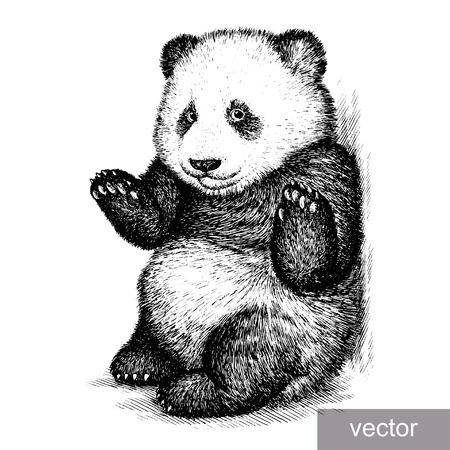 Graveren geïsoleerde panda beer vector illustratie schets. lineaire kunst Stockfoto - 46498417