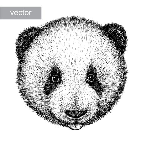 panda bear: engrave isolated panda bear vector illustration sketch. linear art