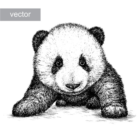 panda bear: engrave isolated panda bear vector illustration sketch. linear art
