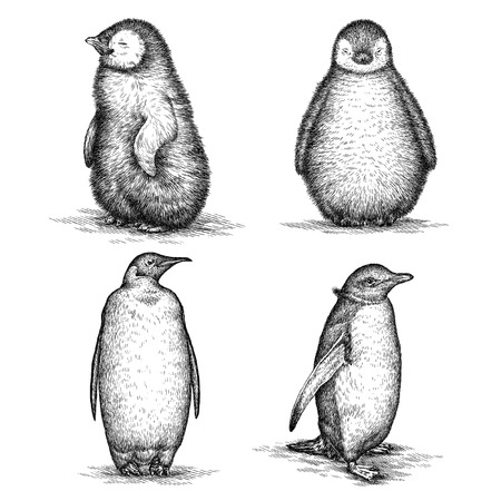 engrave isolated penguin illustration sketch. linear art Stock Photo