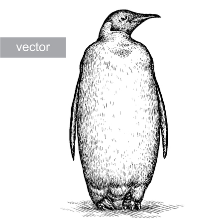 penguin: engrave isolated penguin vector illustration sketch. linear art