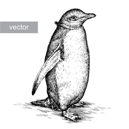 arctic penguin: engrave isolated penguin vector illustration sketch. linear art
