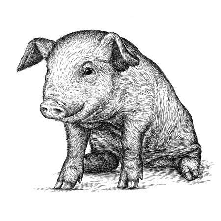 jabali: grabar aislado Ilustración cerdo boceto. lineal de la técnica