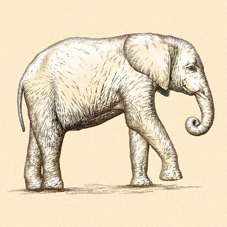 linear art: engrave isolated elephant illustration sketch. linear art Stock Photo