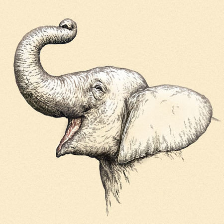 african grey: engrave isolated elephant illustration sketch. linear art Stock Photo