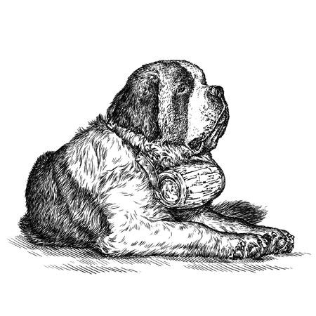 saint bernard: engrave isolated dog illustration sketch. linear art Stock Photo