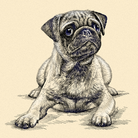 linear art: engrave isolated dog illustration sketch. linear art Stock Photo
