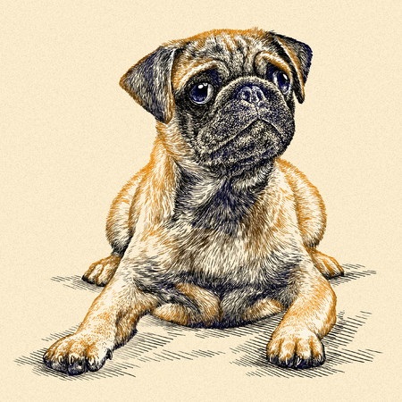 engrave isolated dog illustration sketch. linear art Stock Photo