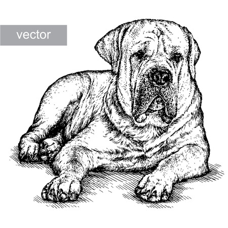 rescue dog: engrave isolated dog vector illustration sketch. linear art