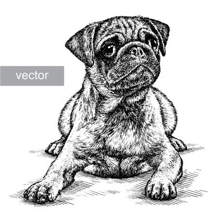 격리 된 개 벡터 일러스트 스케치를 새기다. 선형 예술 일러스트
