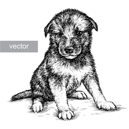 pug nose: engrave isolated dog vector illustration sketch. linear art