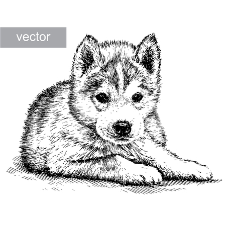 husky puppy: engrave isolated dog vector illustration sketch. linear art