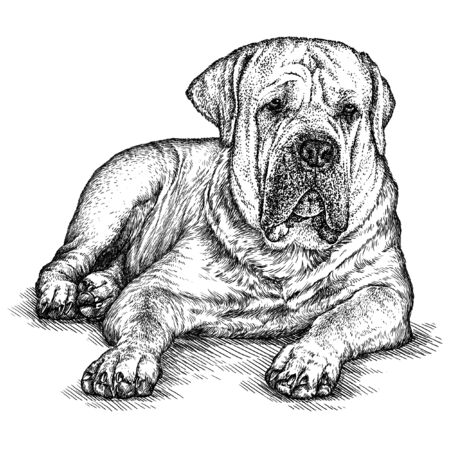 engrave: engrave isolated dog illustration sketch. linear art Stock Photo