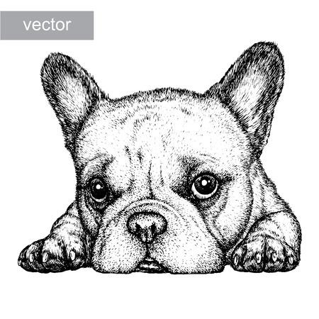 chien: graver isol�e de chien illustration croquis. art lin�aire