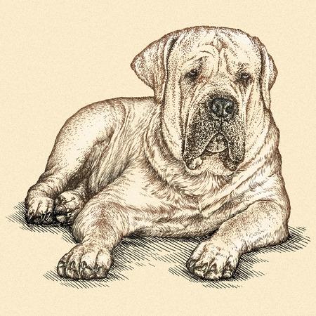 predator: engrave isolated dog illustration sketch. linear art Stock Photo