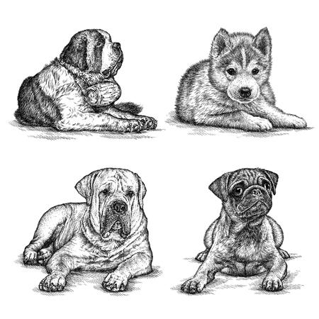 graveren geïsoleerde hond illustratie schets. lineaire kunst Stockfoto