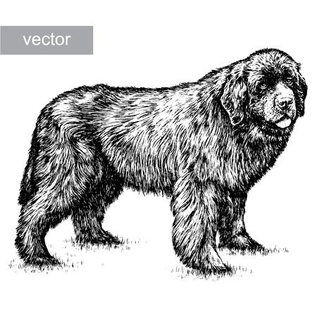 sheepdog: engrave isolated dog vector illustration sketch. linear art