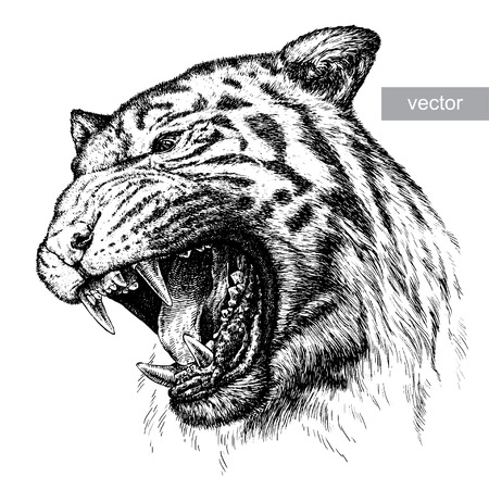 engrave isolated tiger vector illustration sketch. linear art