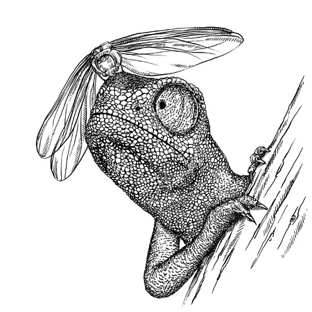 dissatisfied: engrave isolated chameleon illustration sketch. linear art Stock Photo