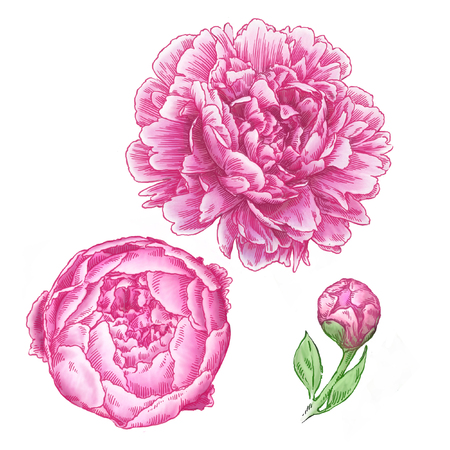 engrave: engrave isolated flower illustration sketch. linear art