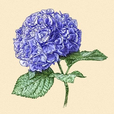 vintage design: engrave isolated flower illustration sketch. linear art