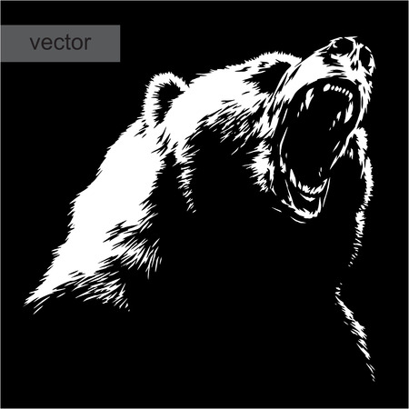 white fur: engrave isolated bear vector illustration sketch. linear art Illustration
