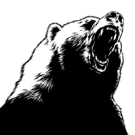 grabar aislado Ilustración oso boceto. lineal de la técnica