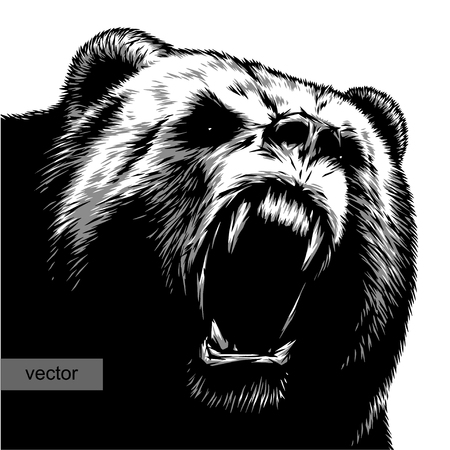 engrave isolated bear vector illustration sketch. linear art Vectores