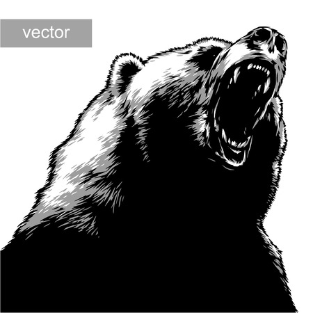 engrave isolated bear vector illustration sketch. linear art Çizim