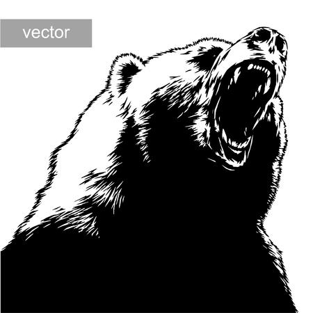Graver isolé vecteur ours illustration croquis. art linéaire Banque d'images - 46500124