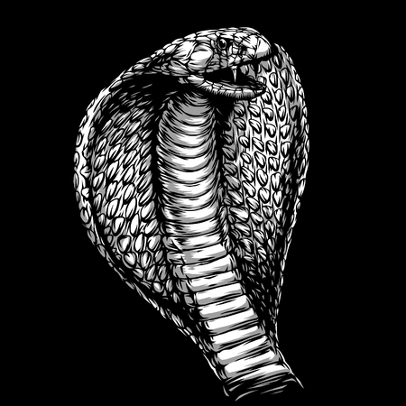 tricky: engrave isolated cobra attack illustration sketch. linear art Stock Photo