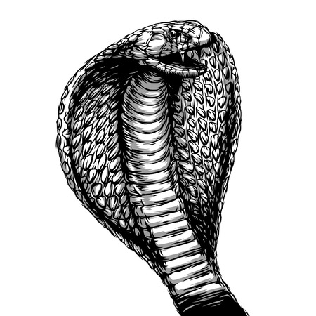 engrave isolated cobra attack illustration sketch. linear art Stock Photo