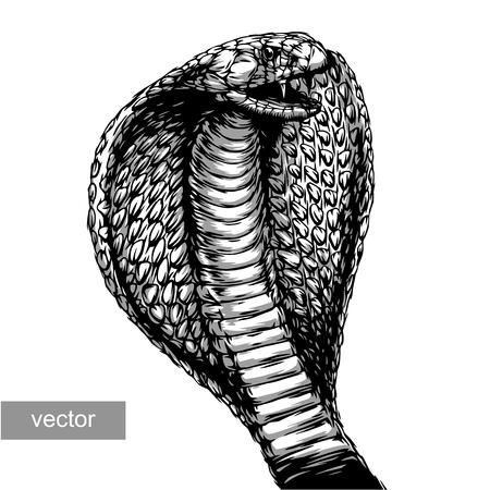 serpiente cobra: grabar aislado ataque cobra ilustración vectorial boceto. lineal de la técnica