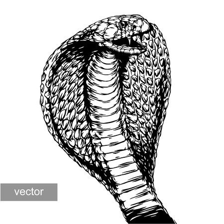 cowl: engrave isolated cobra attack vector illustration sketch. linear art