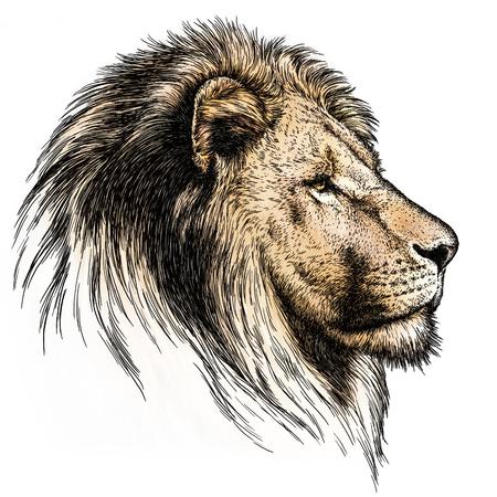 격리 된 사자 그림 스케치를 새기다. 선형 예술