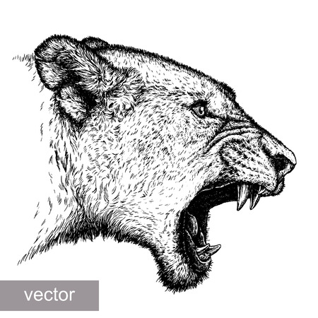 engrave: engrave isolated lion vector illustration sketch. linear art