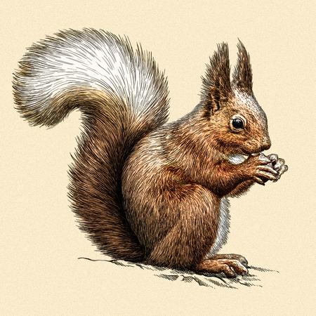 격리 된 다람쥐 그림 스케치를 새기다. 선형 예술