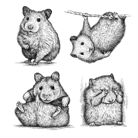 cute hamster: engrave isolated hamster illustration sketch. linear art